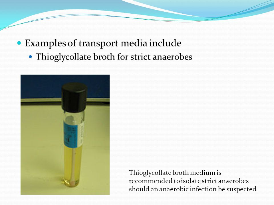 Examples of transport media include
