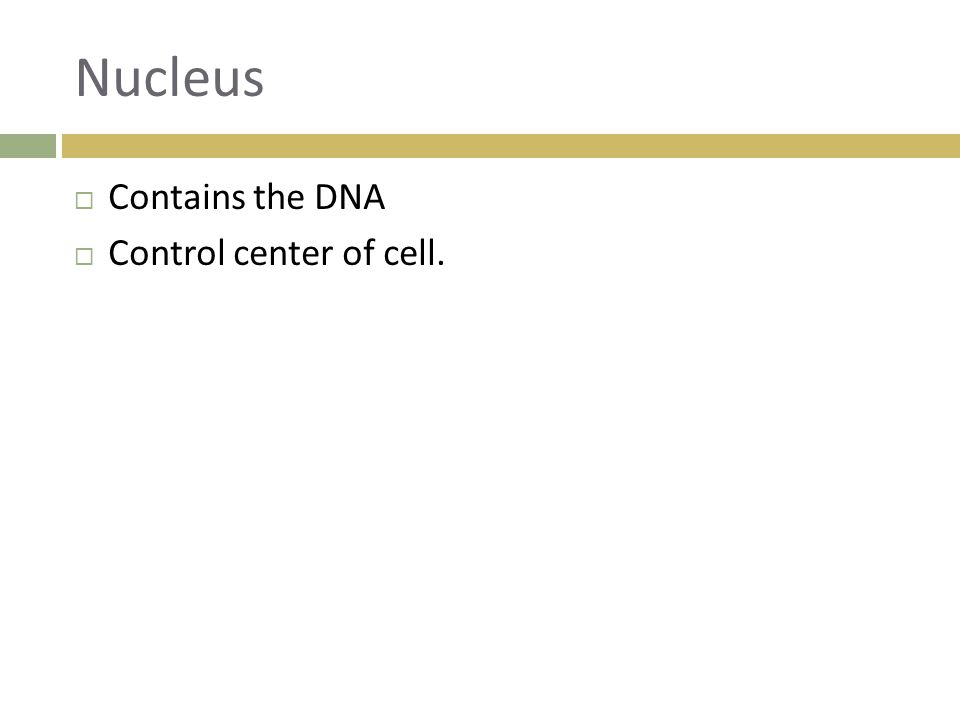 Nucleus Contains the DNA Control center of cell.