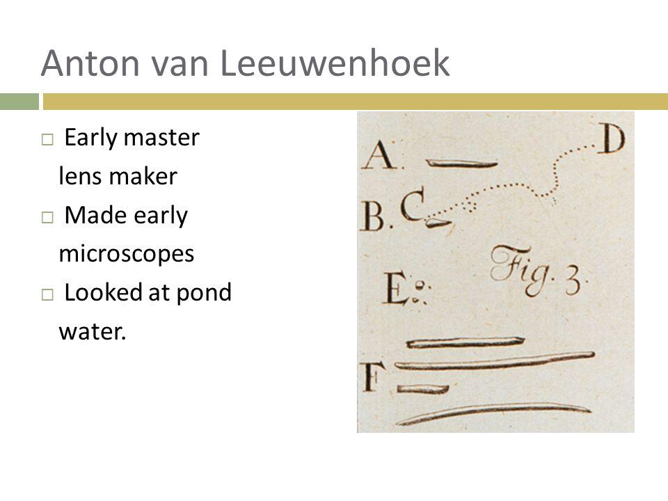 Anton van Leeuwenhoek Early master lens maker Made early microscopes