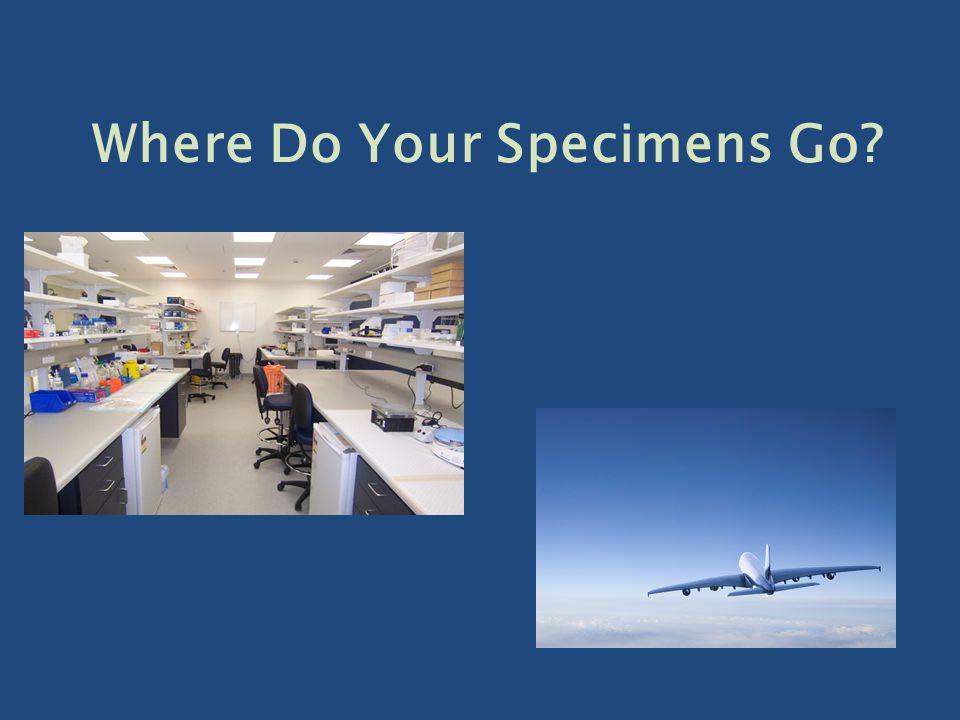 Where Do Your Specimens Go