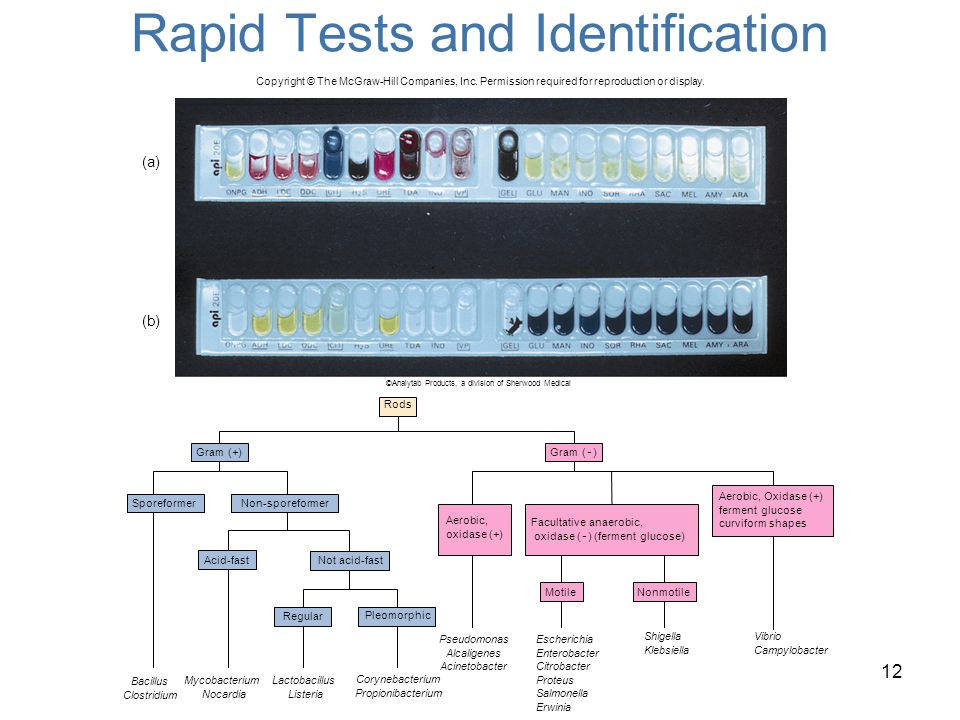 Rapid Tests and Identification