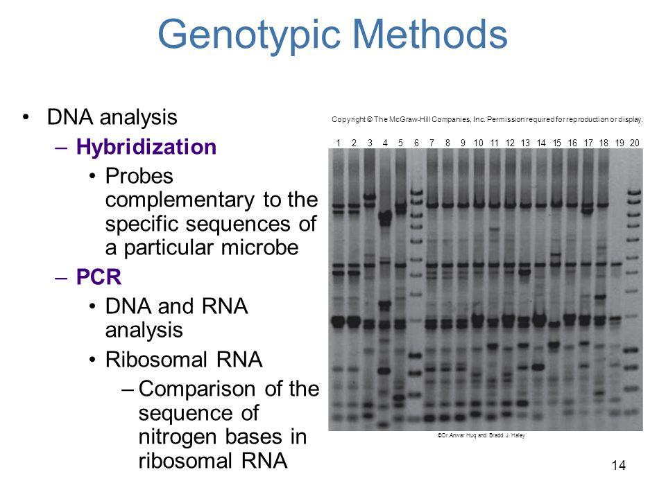Genotypic Methods DNA analysis Hybridization