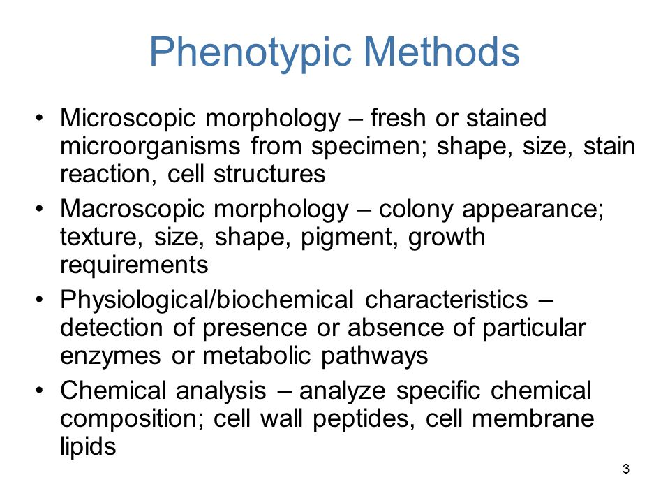 Phenotypic Methods Microscopic morphology – fresh or stained microorganisms from specimen; shape, size, stain reaction, cell structures.
