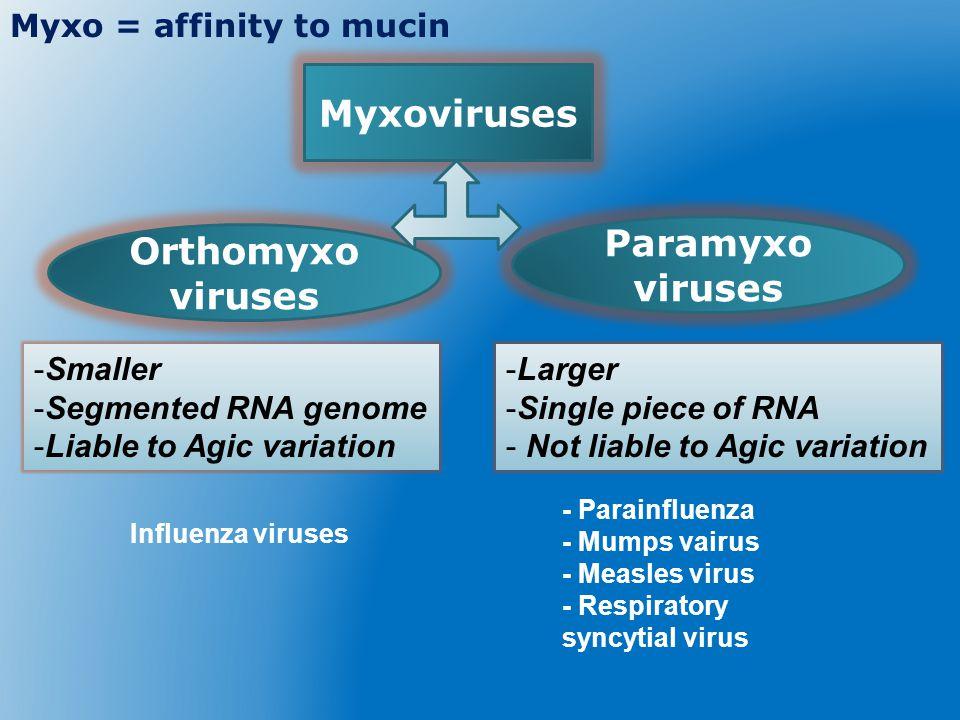 Myxoviruses Paramyxo viruses Orthomyxo viruses