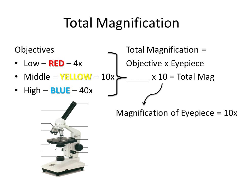Total Magnification Objectives Low – RED – 4x Middle – YELLOW – 10x