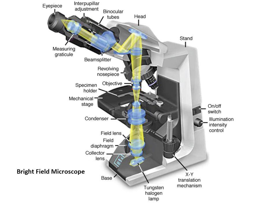 Bright Field Microscope