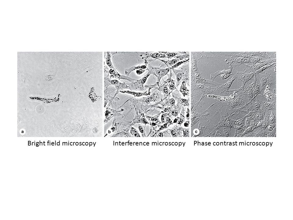 Bright field microscopy