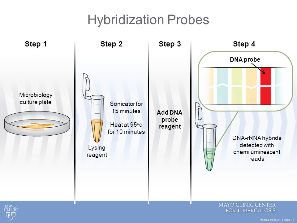 Hybridization Probes Step 1 Step 2 Step 3 Step 4 DNA probe