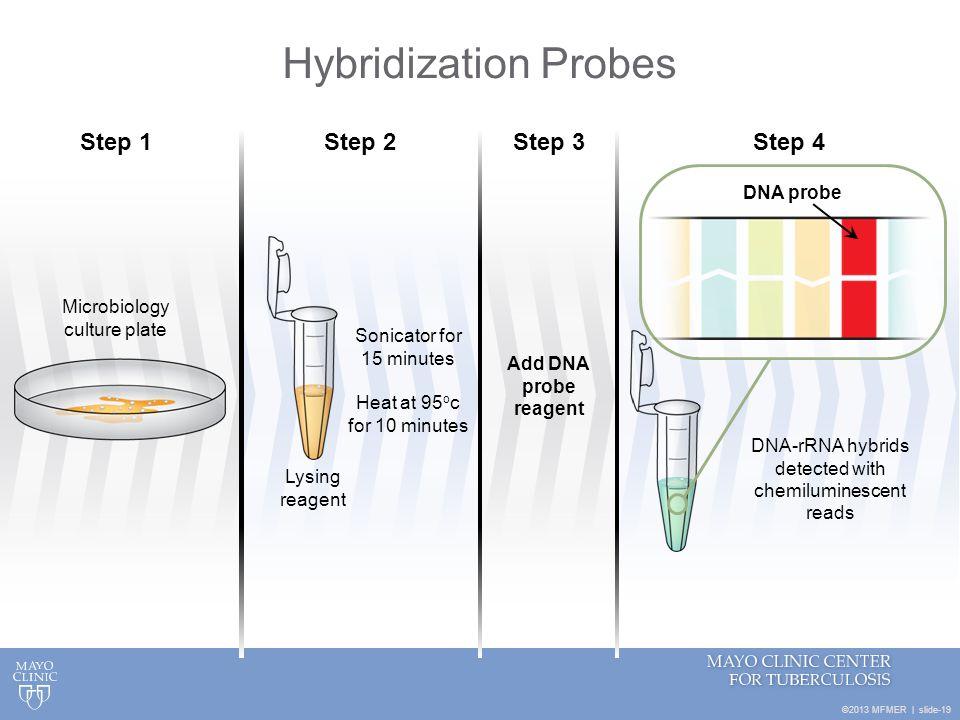 Hybridization Probes Step 1 Step 2 Step 3 Step 4 DNA probe