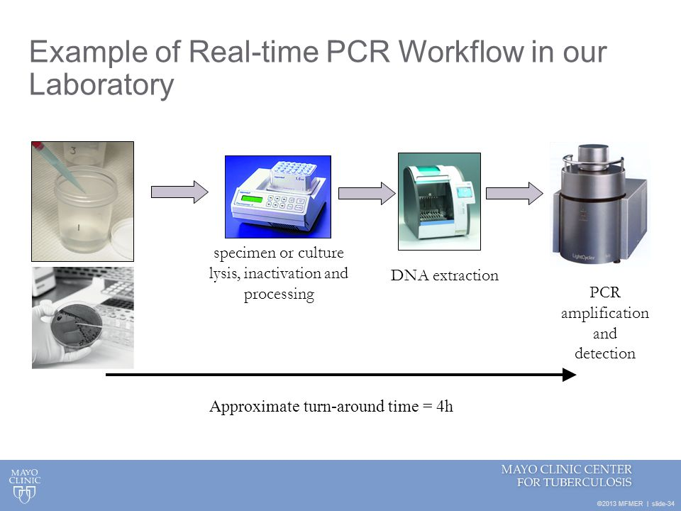 Example of Real-time PCR Workflow in our Laboratory