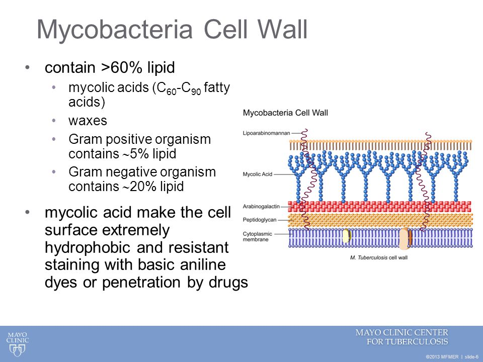 Mycobacteria Cell Wall