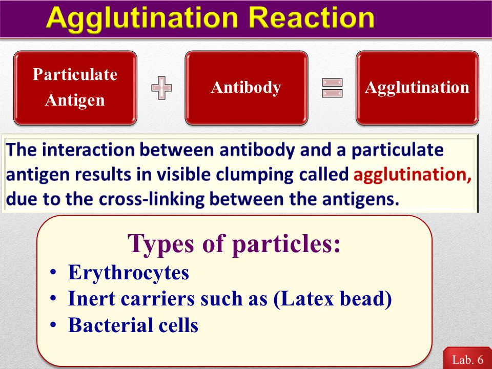Agglutination Reaction
