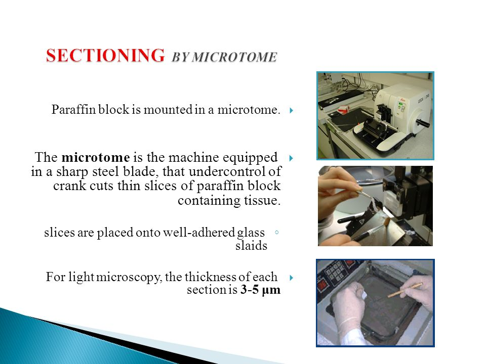 SECTIONING BY MICROTOME