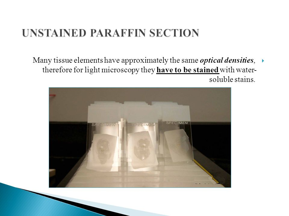 UNSTAINED PARAFFIN SECTION