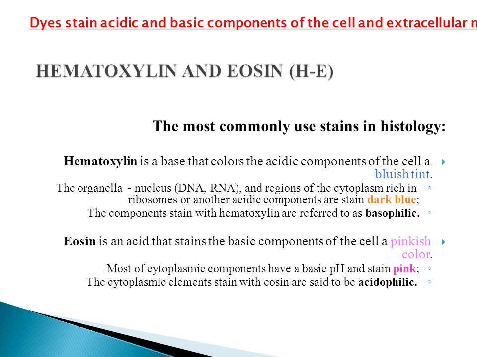 HEMATOXYLIN AND EOSIN (H-E)