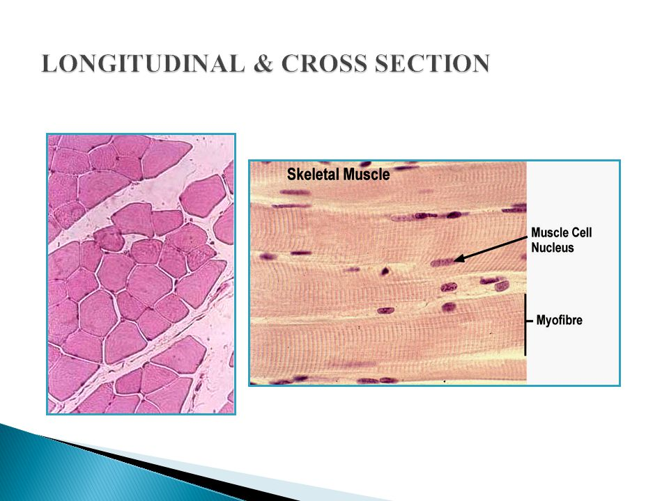 LONGITUDINAL & CROSS SECTION