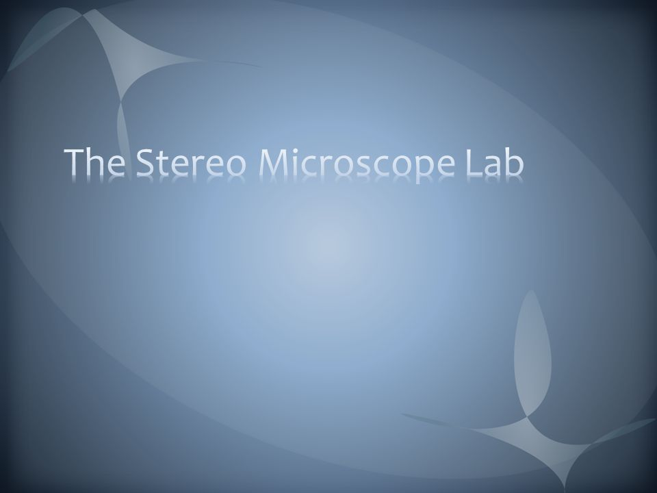 The Stereo Microscope Lab