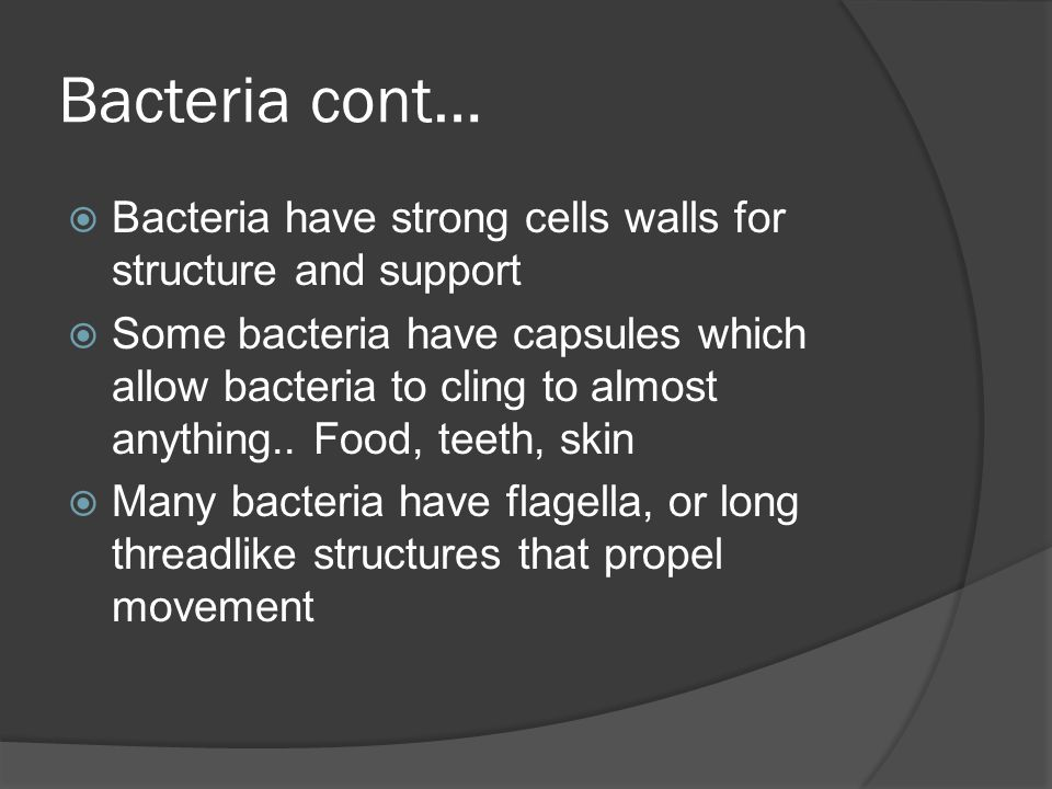 Bacteria cont… Bacteria have strong cells walls for structure and support.