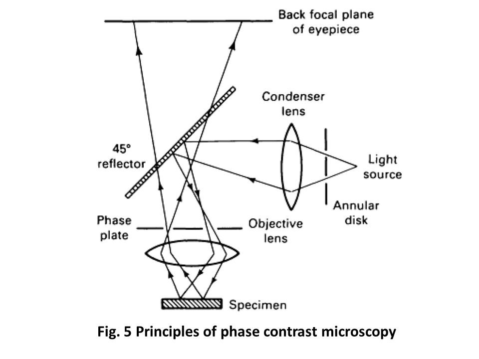 Fig. 5 Principles of phase contrast microscopy