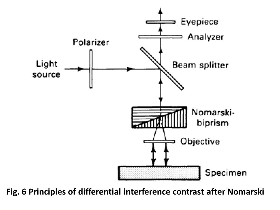 Fig. 6 Principles of differential interference contrast after Nomarski