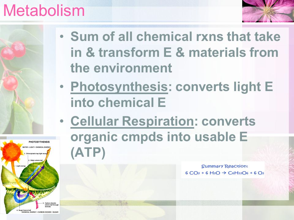 Metabolism Sum of all chemical rxns that take in & transform E & materials from the environment. Photosynthesis: converts light E into chemical E.