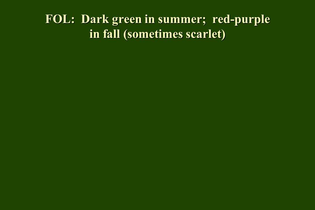FOL: Dark green in summer; red-purple in fall (sometimes scarlet)