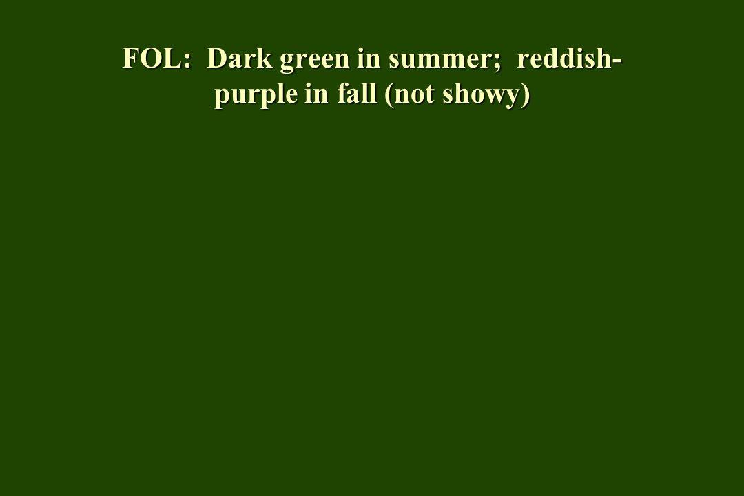 FOL: Dark green in summer; reddish-purple in fall (not showy)