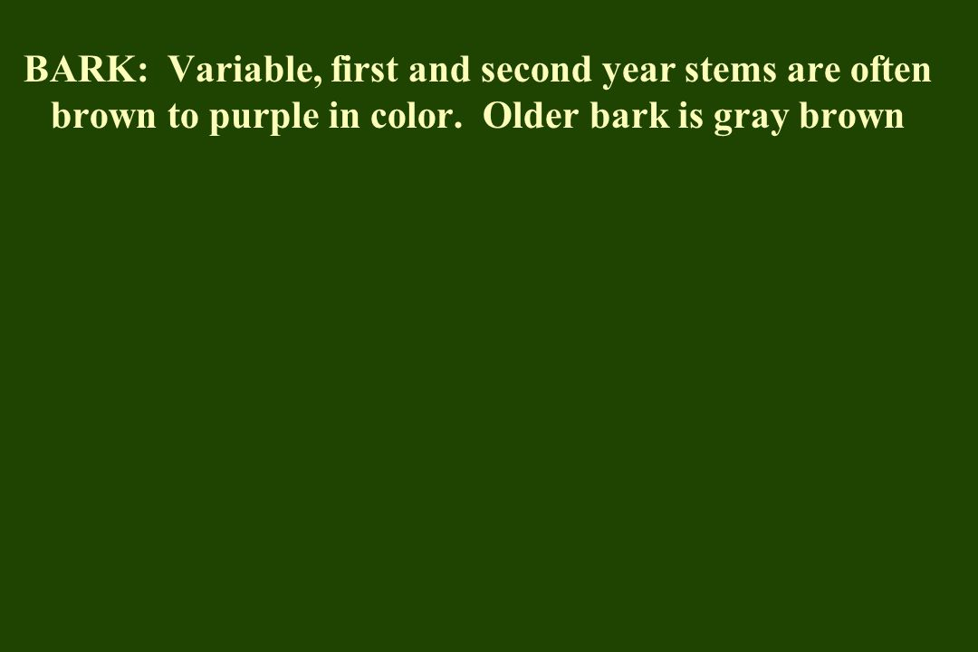 BARK: Variable, first and second year stems are often brown to purple in color.