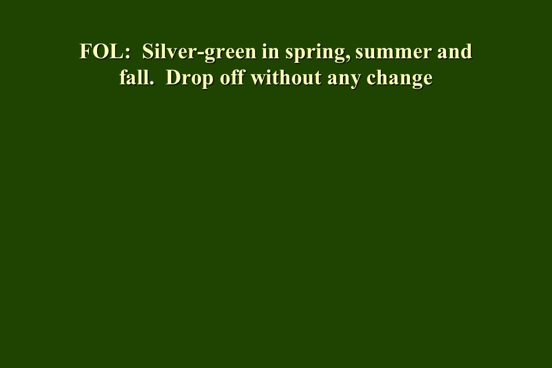 FOL: Silver-green in spring, summer and fall