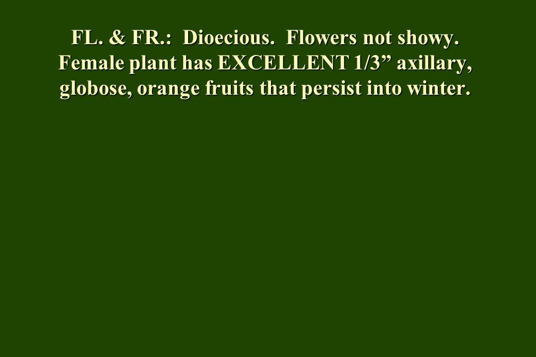 FL. & FR. : Dioecious. Flowers not showy