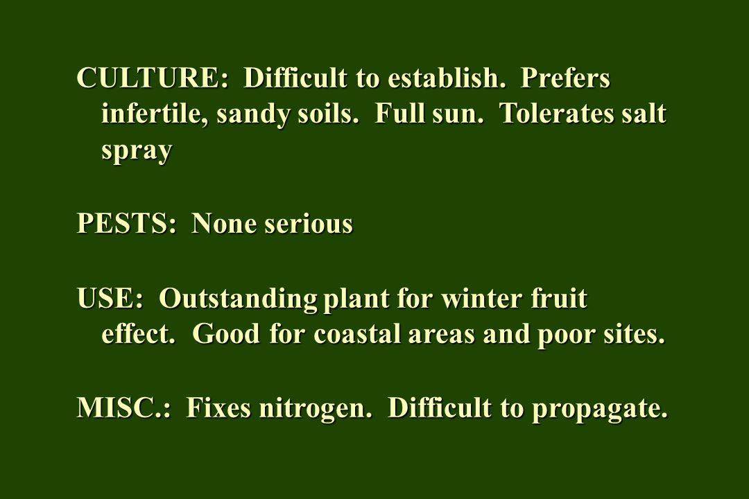 CULTURE: Difficult to establish. Prefers infertile, sandy soils
