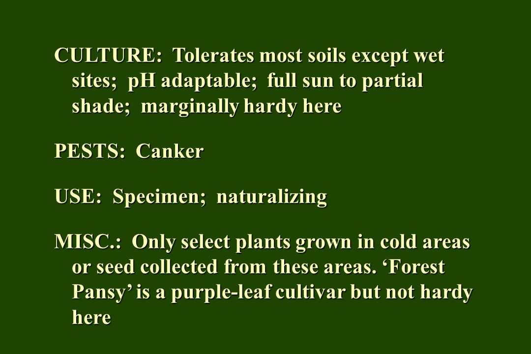 CULTURE: Tolerates most soils except wet sites; pH adaptable; full sun to partial shade; marginally hardy here
