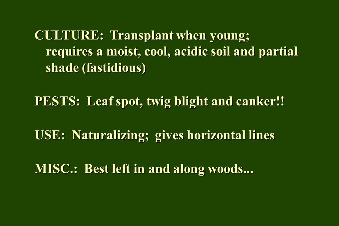 CULTURE: Transplant when young; requires a moist, cool, acidic soil and partial shade (fastidious)