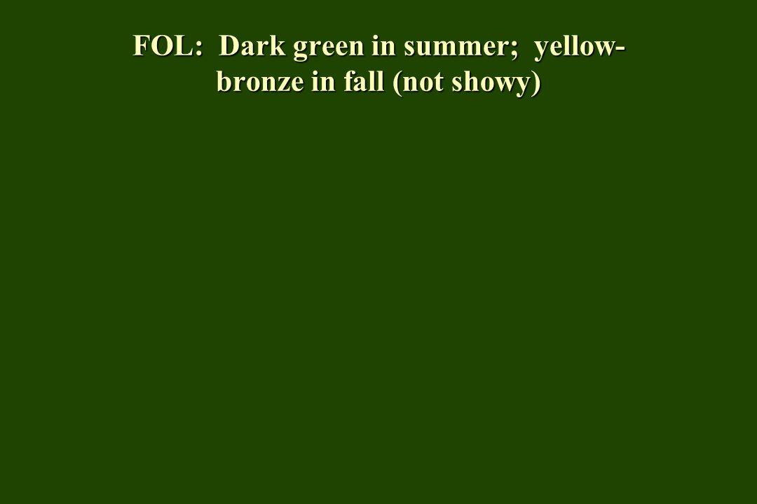FOL: Dark green in summer; yellow-bronze in fall (not showy)