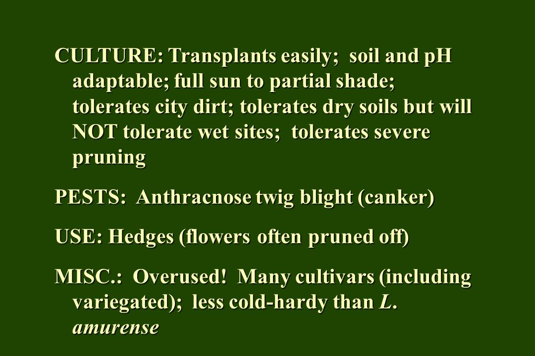 CULTURE: Transplants easily; soil and pH adaptable; full sun to partial shade; tolerates city dirt; tolerates dry soils but will NOT tolerate wet sites; tolerates severe pruning