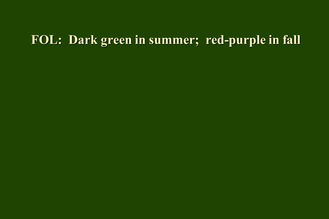 FOL: Dark green in summer; red-purple in fall