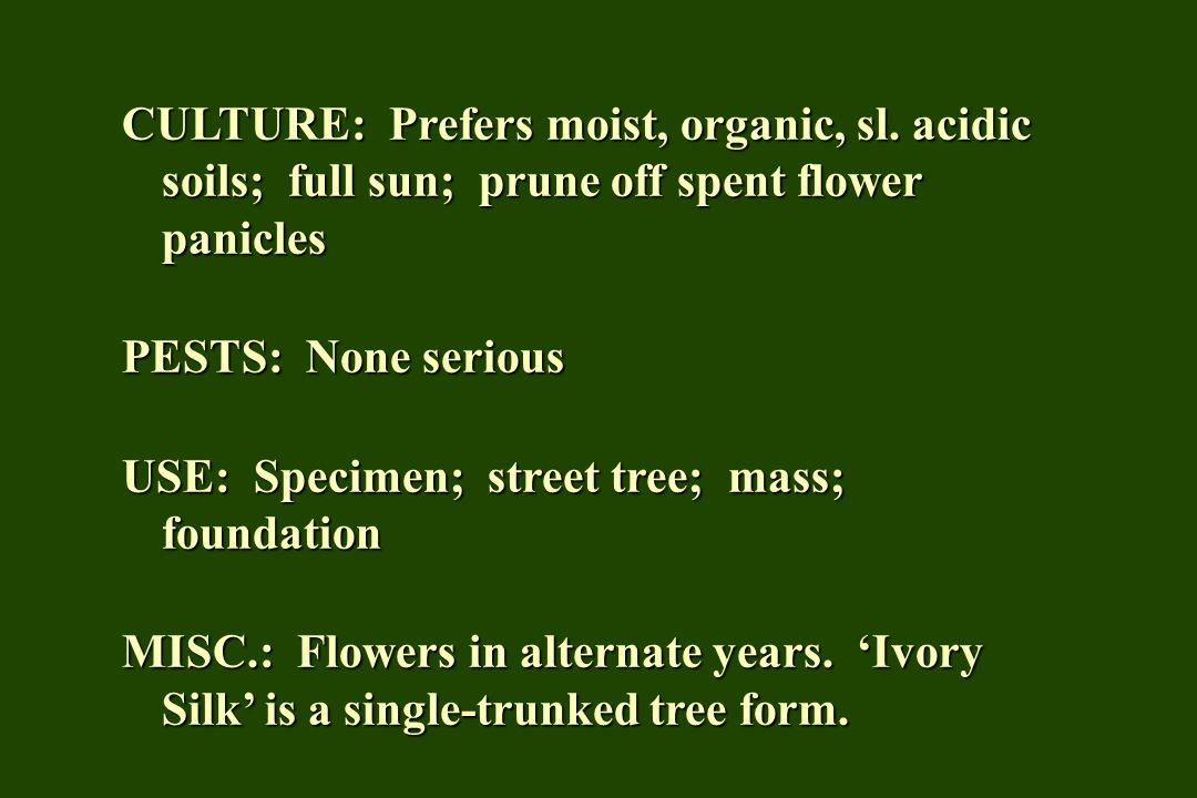 CULTURE: Prefers moist, organic, sl