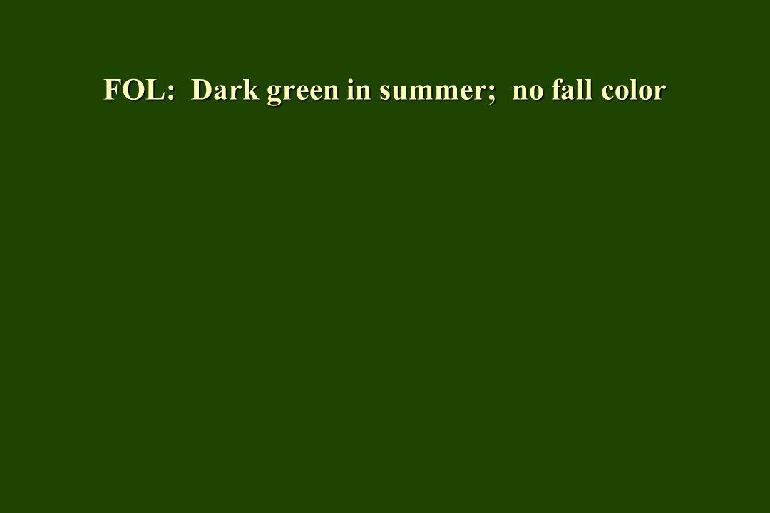 FOL: Dark green in summer; no fall color