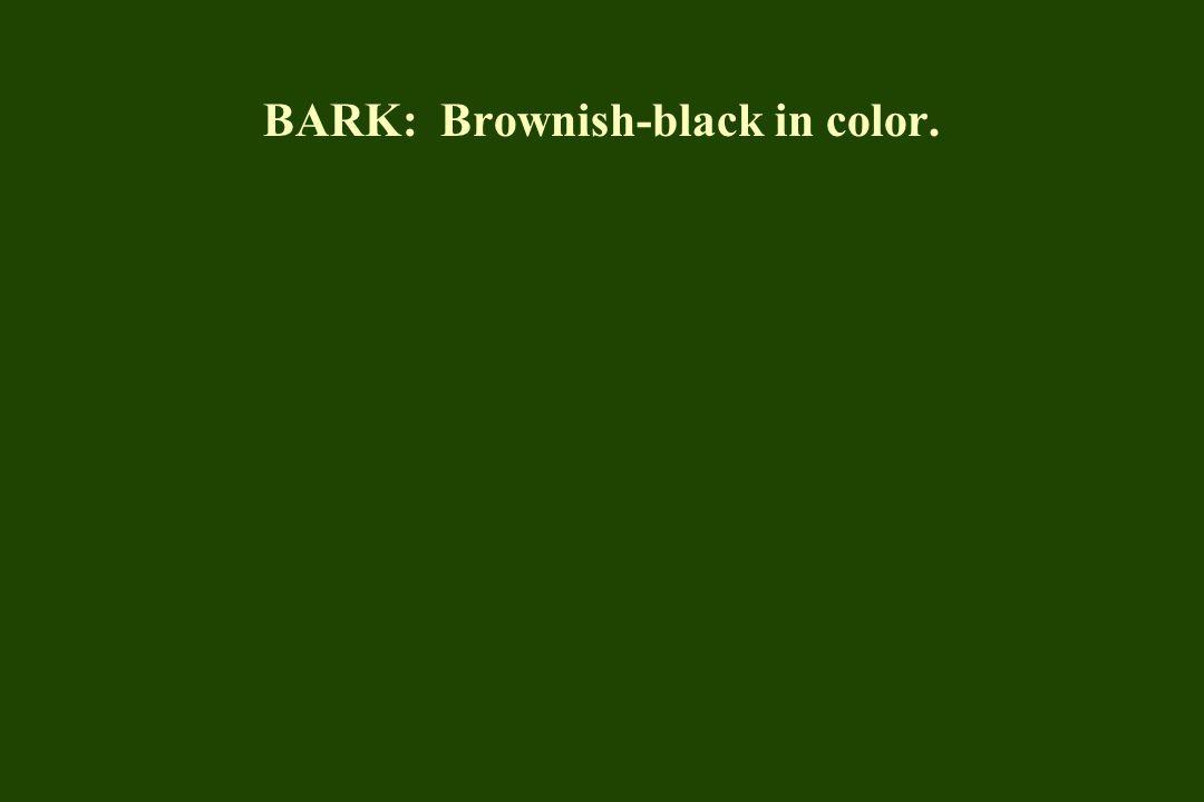 BARK: Brownish-black in color.