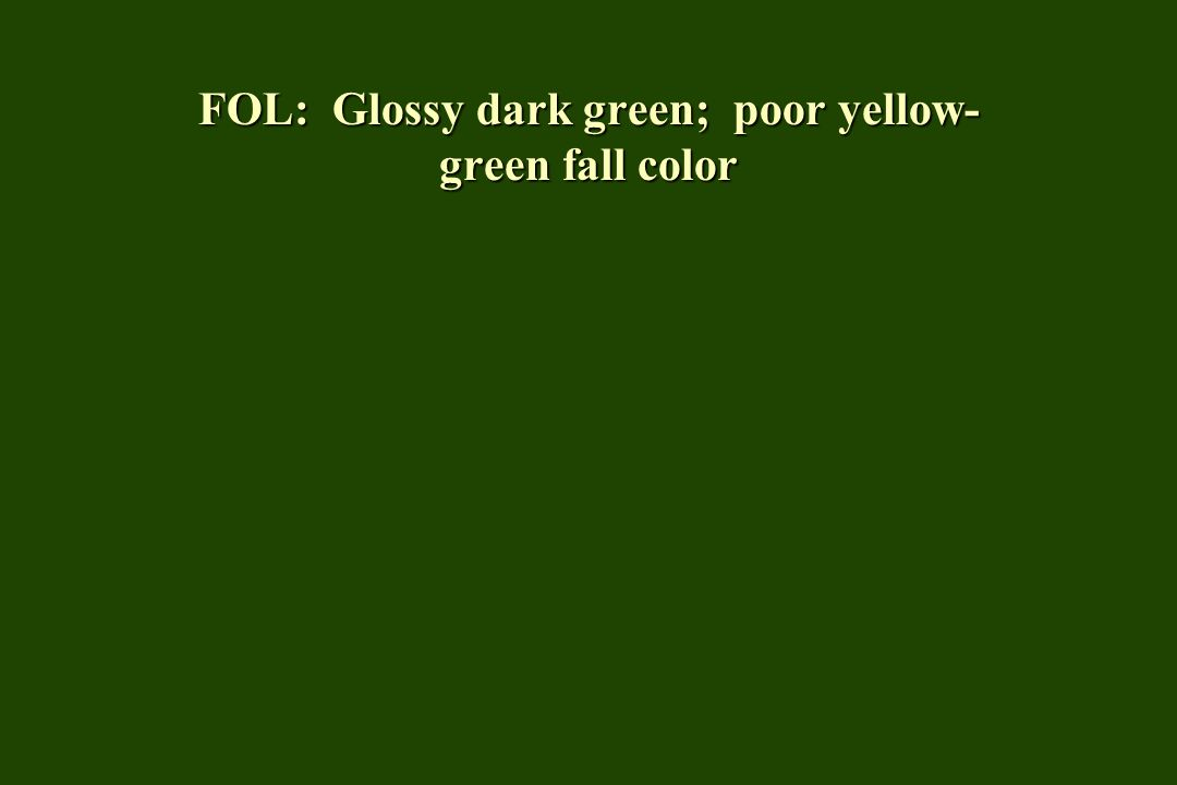 FOL: Glossy dark green; poor yellow-green fall color