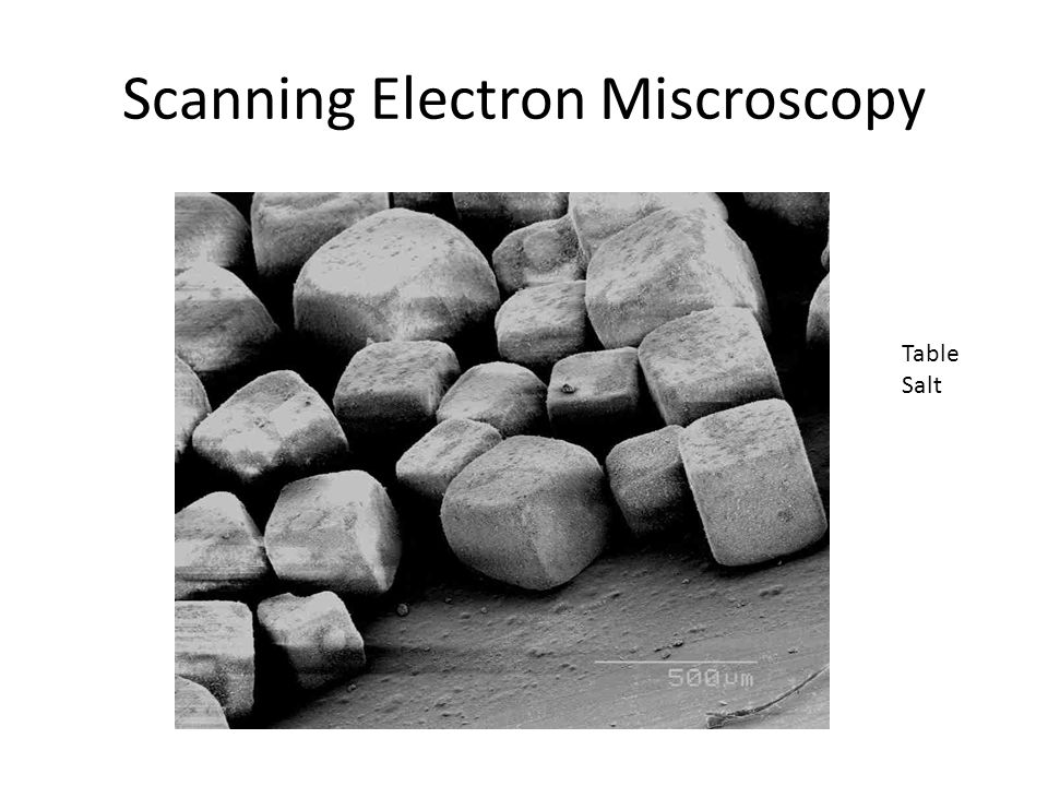 Scanning Electron Miscroscopy