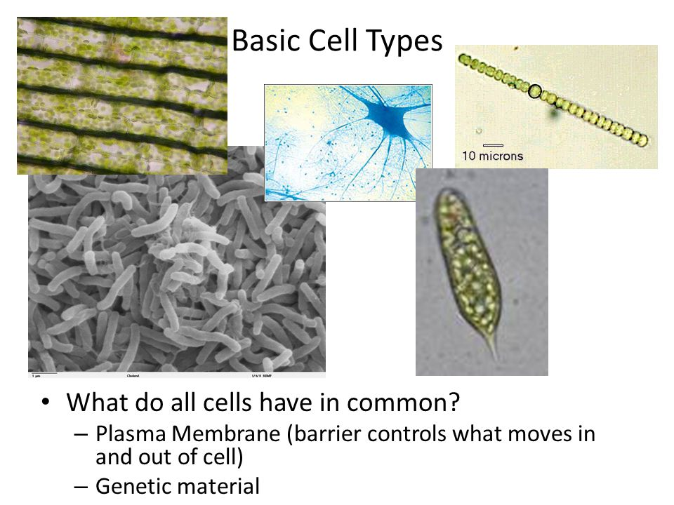 Basic Cell Types What do all cells have in common