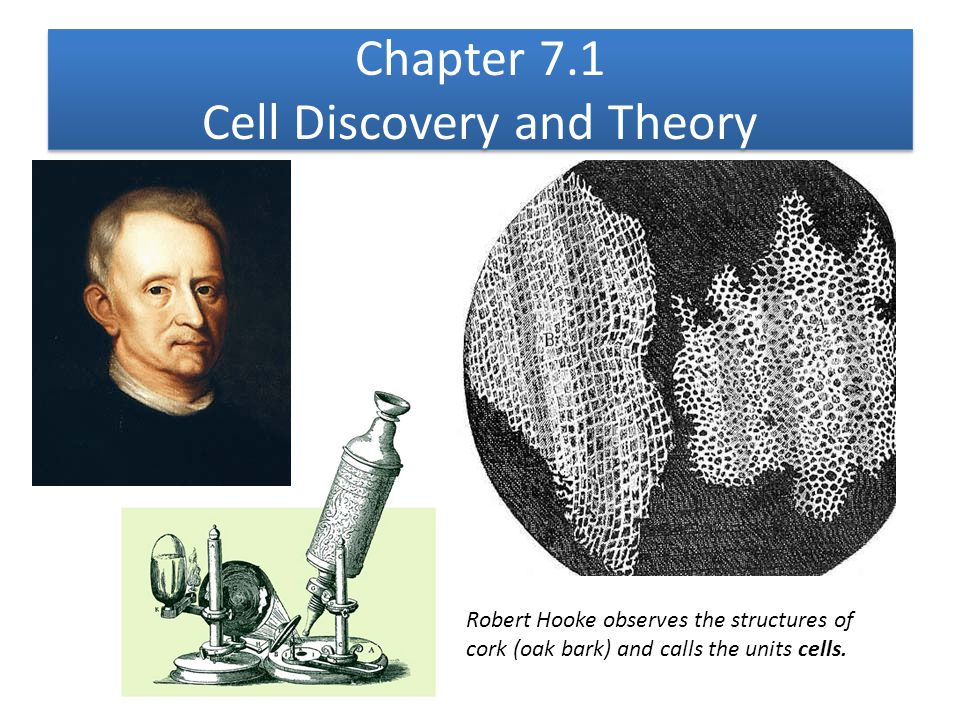 Chapter 7.1 Cell Discovery and Theory