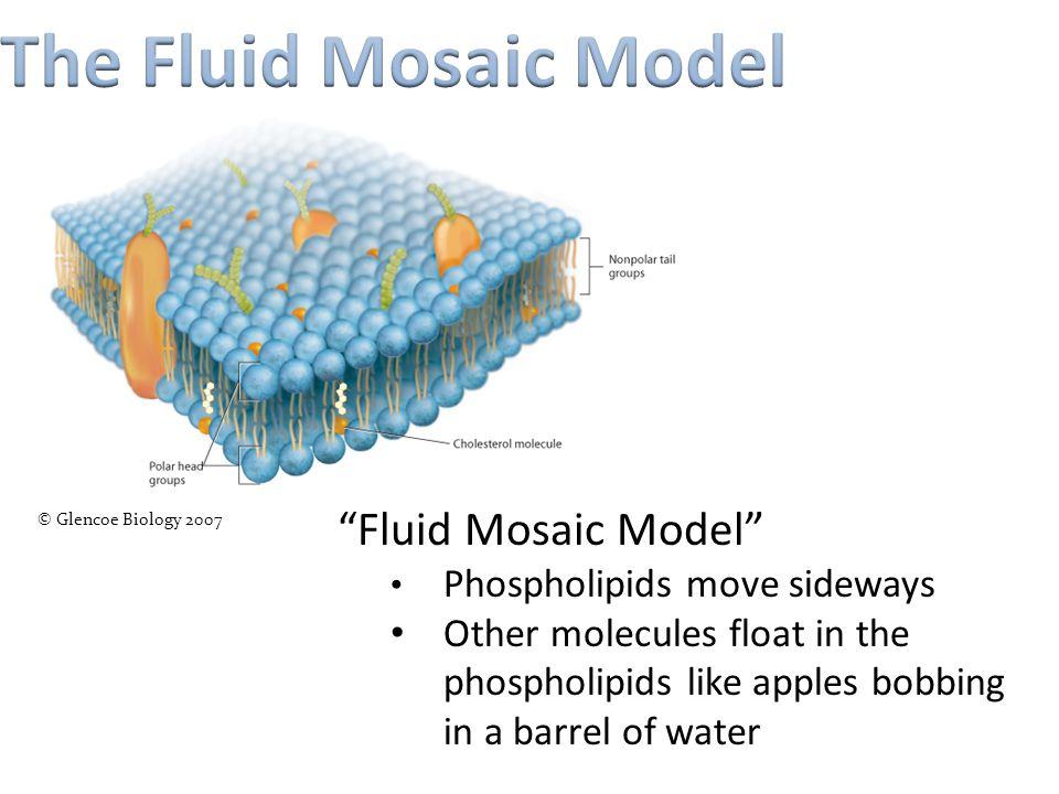 The Fluid Mosaic Model Fluid Mosaic Model