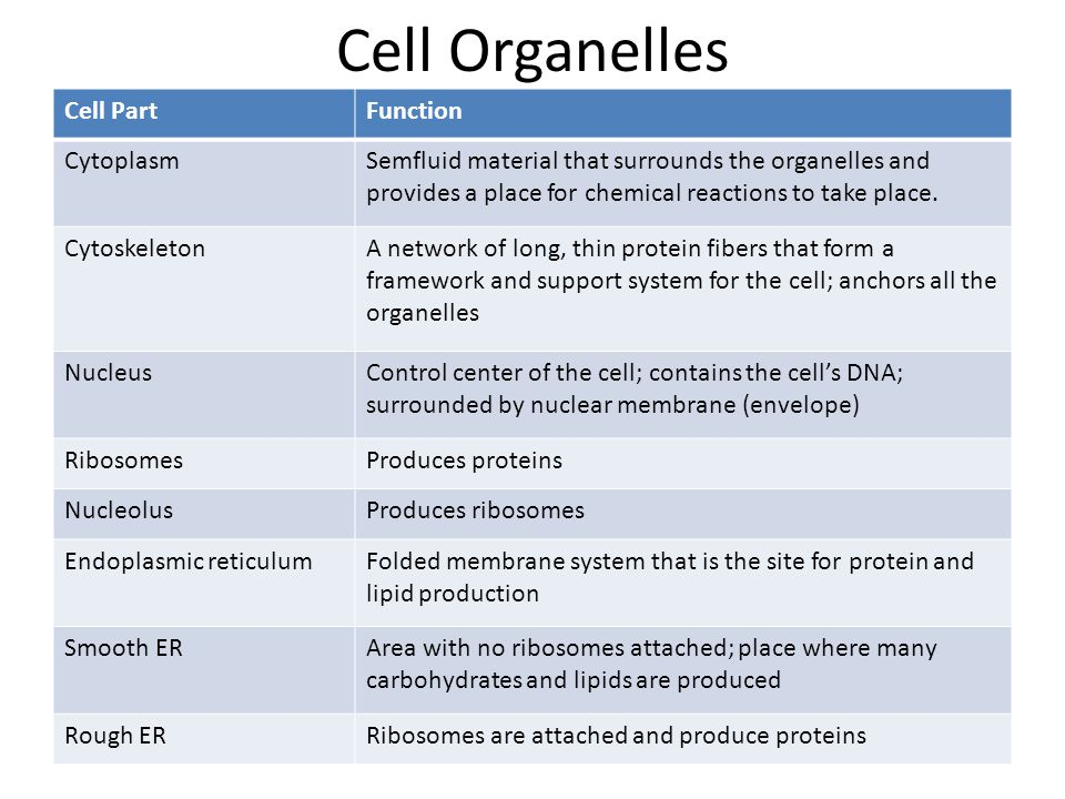 Cell Organelles Cell Part Function Cytoplasm