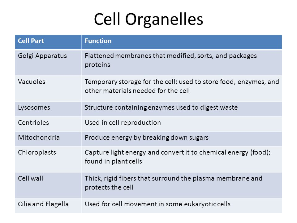 Cell Organelles Cell Part Function Golgi Apparatus