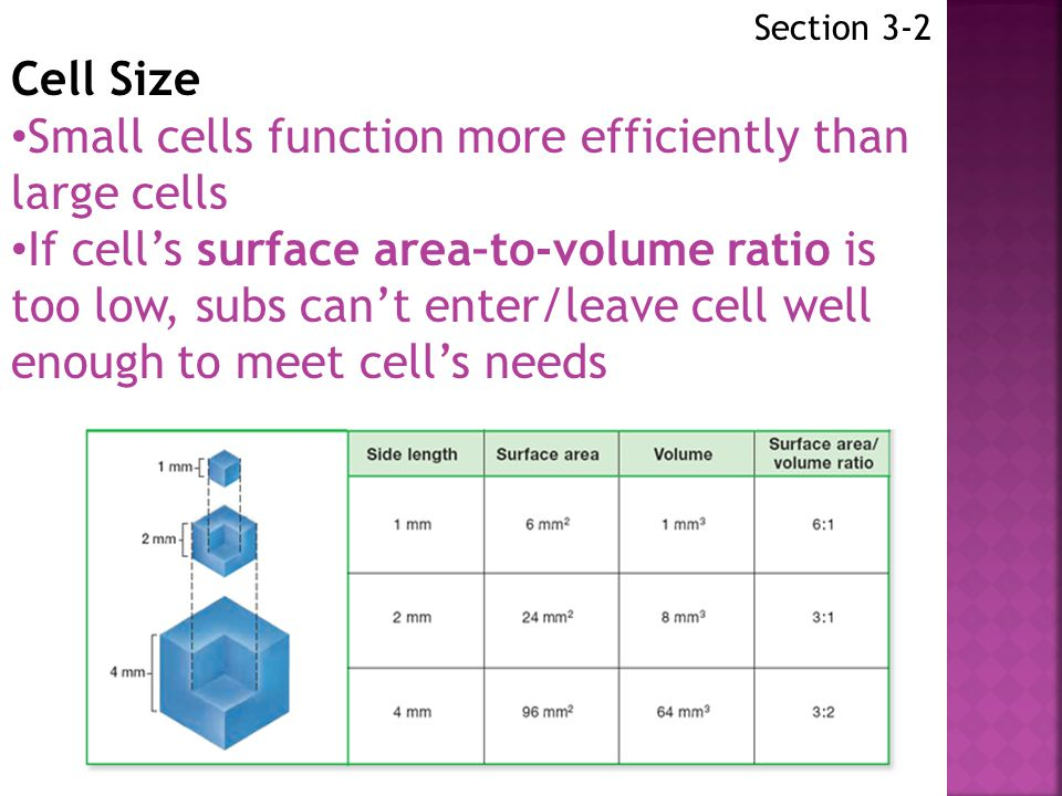 Small cells function more efficiently than large cells