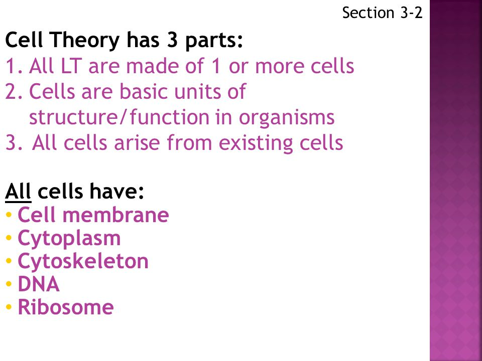 1. All LT are made of 1 or more cells