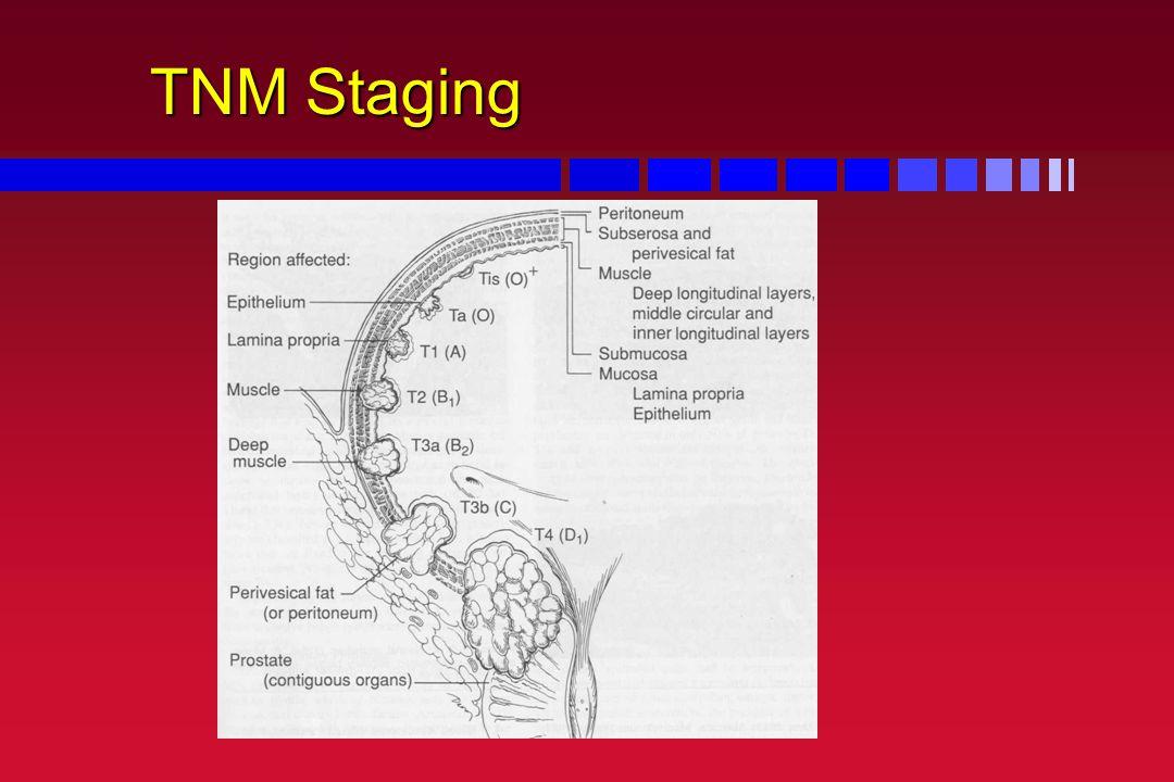 TNM Staging