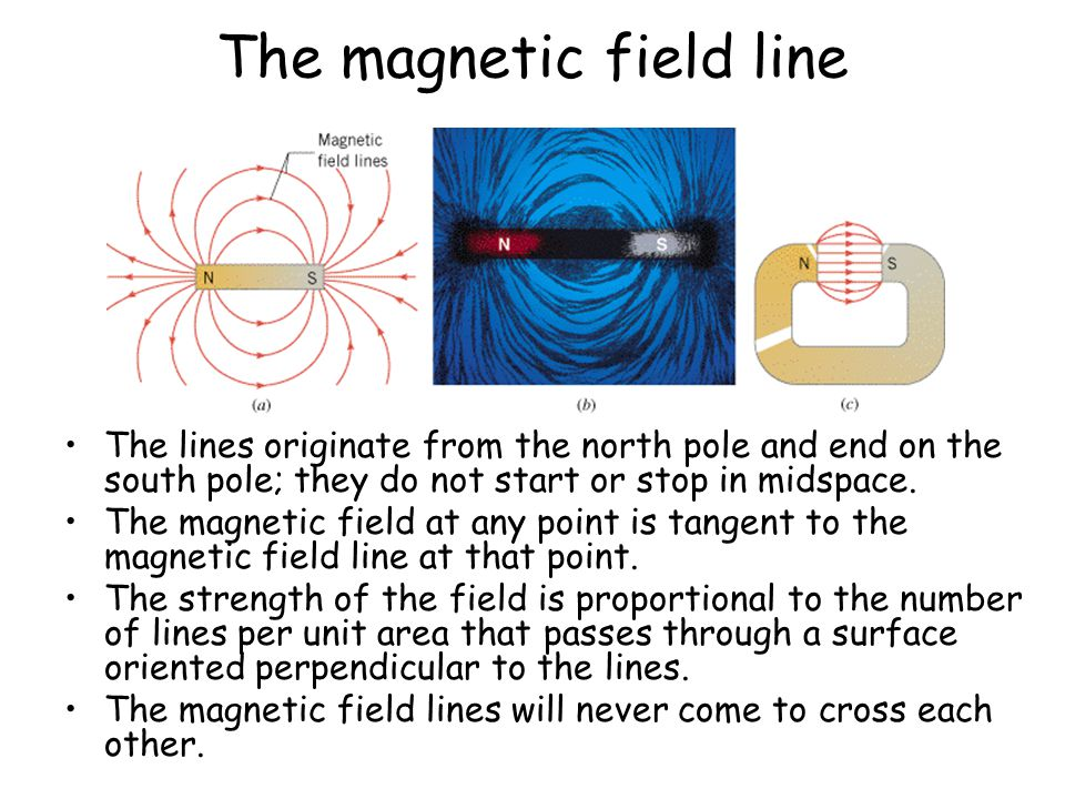 The magnetic field line